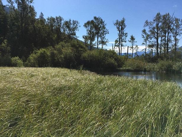Dillon Creek Wetland Restoration Project Launch